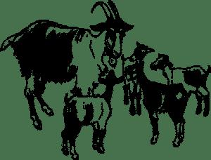 A farkas és a kecskollók - Grimm mesék - Mesenapok